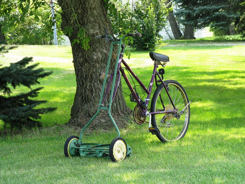How to Treat Your Lawn